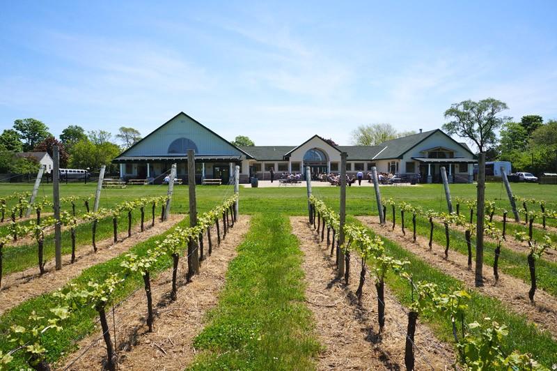 duck-walk-vineyard-north