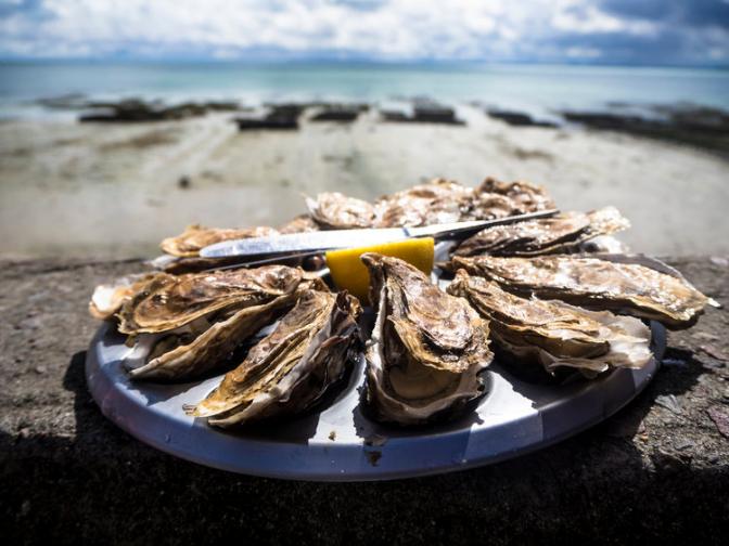 palmervineyards shellfish